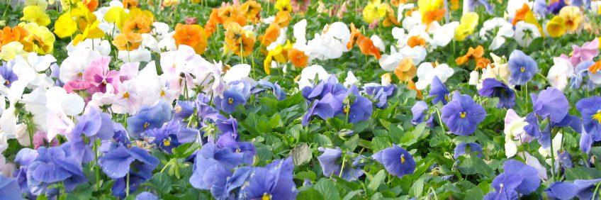 9_spring-flowers01